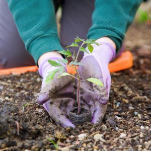 Amphialos Gardening services Pafos Cyprus