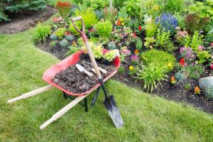 Amphialos landscaping & planting Pafos Cyprus