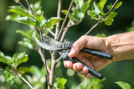 Plant pruning amphialos property management gardening cyprus paphos